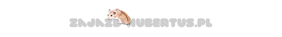 Opieka nad chomikami | Świat zwierząt - http://zajazd-hubertus.pl/